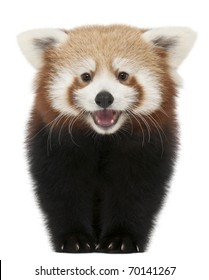 Amigurumi Food: Red Panda en proceso! | 280x209