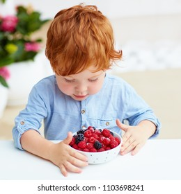 young redhead toddler baby boy tasting the fresh and ripe raspberries and blackberries