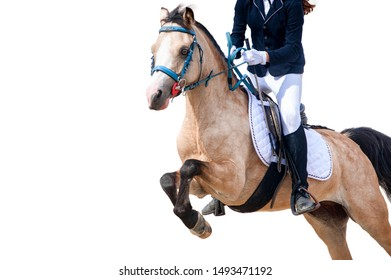 young rider on a horse jumping isolated on white background