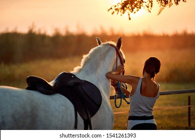 Young rider woman with her beautiful horse.