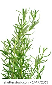 Young rosemary plant isolated on white