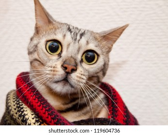 Young sad bengal cat in striped scarf