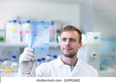 Young scientist checking his result of western blot