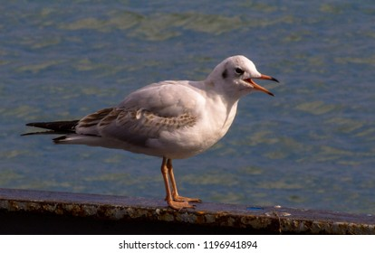 young seagull on fence