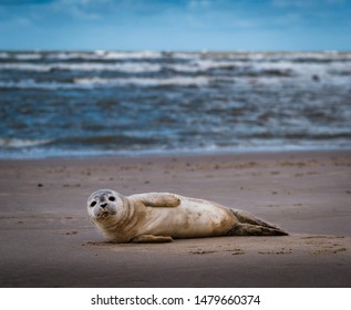 Young seal on beach in nature