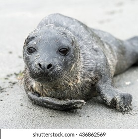 young seal on the sandy coast
