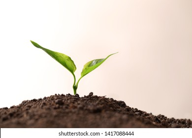 Young seedling in fertile soil on light background, space for text
