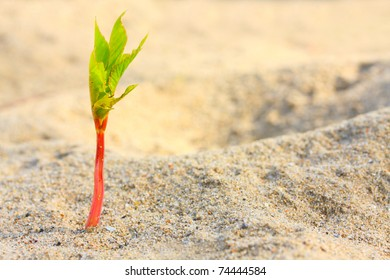 Young seedling growing in a desert sand. Extremely close up with shallow DOF.