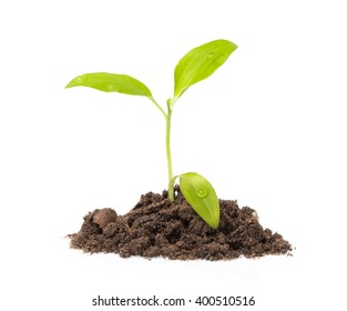 Young seedling growing in a soil isolated on white background