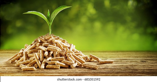Young seedling sprouting from a pile of wood pellets outdoors on a green background with copy space conceptual of renewable energy and fuel