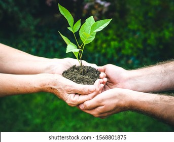 Young and senior hands holding green plant. Elderly woman with wrinkled hands gives a green plant to a young man in sunlight, blurred green background. Ecology, life, Earth, new generation concept.