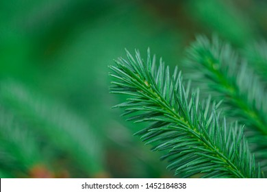 The young shoots ate in the northern forest. Shallow depth of field, fresh saturated green color.