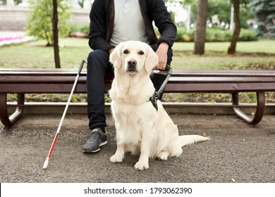 young sick man with helpful guide dog in city streets, sit having rest, man and golden retriever, in love