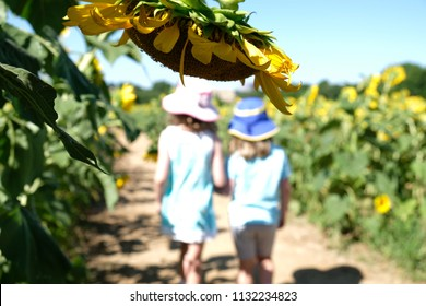 Young sisters stroll through a field of sunflowers at Dorothea Dix Park in Raleigh North Carolina