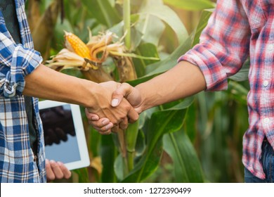 Young smart farmer standing and shaking hands on corn  field. Use a tablet.Smart agriculture. Farmer using tablet corn planting.