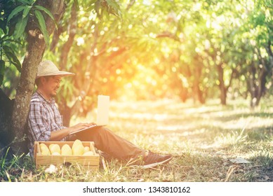 young smart farmer working with tablet in mango orchard, Agricultural bisiness concept