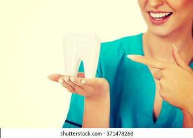 Young smile dentist holding a tooth model