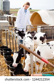 Young smiling female veterinarian inspecting calves in dairy farm