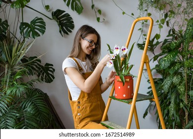Young smiling woman gardener in glasses wearing overalls, taking care for orchid in old red milk can standing on orange vintage ladder. Home gardening, love of houseplants, freelance.