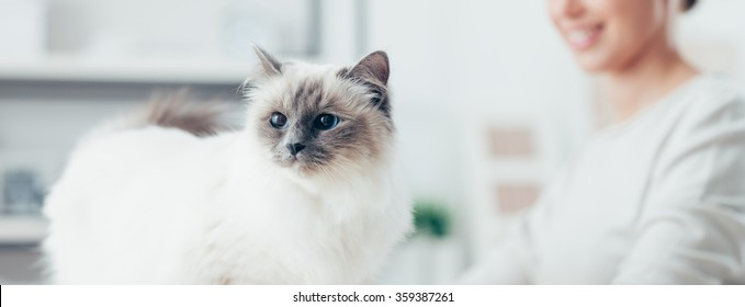 Young smiling woman and her lovely cat posing at home, pet care and lifestyle concept