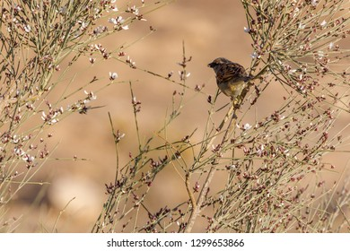 Young sparrow on bush eat white flower at sunrise