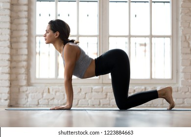 Young sporty attractive woman practicing yoga, doing asana paired with Cat Pose on the exhale exercise, Cow, Bitilasana pose, working out, wearing sportswear, indoor full length, white yoga studio