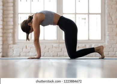 Young sporty attractive woman practicing yoga, doing asana paired with Cow Pose on the inhale exercise, Cat, Marjaryasana pose, working out, wearing sportswear, indoor full length, white yoga studio