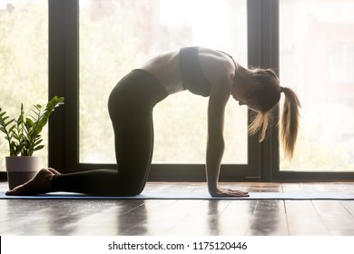 Young sporty woman practicing yoga, doing asana paired with Cow Pose on the inhale, Cat, Marjaryasana pose, working out, wearing sportswear, grey pants and top, indoor full length, yoga studio