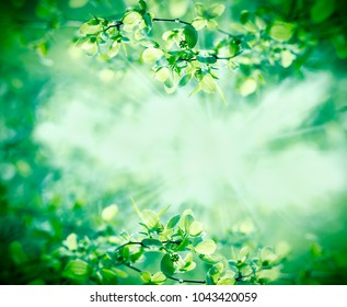 Young spring leaves in forest lit by sunbeams - sun rays