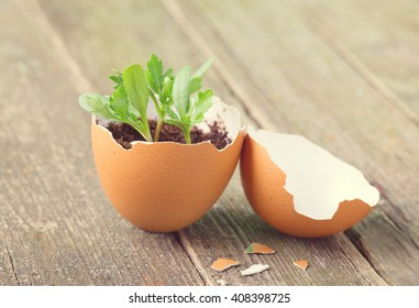 Young sprout in a half of an egg shell. Symbol of origin and development of life and spring. Close up, small depth of sharpness