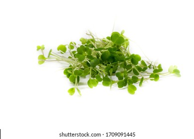 Young sprout microgreen isolated on white background. Microgreen arugula sprouts. Healthy eating concept. Clipping path.Top view