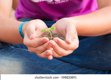 young sprout plants in old dirty hands, concept on green background