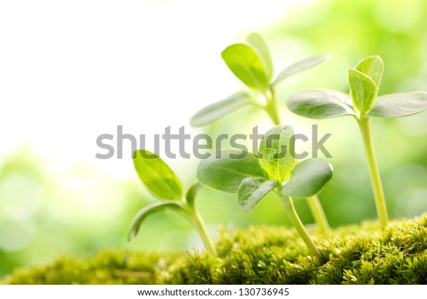 Young sprout in springtime,Closeup.