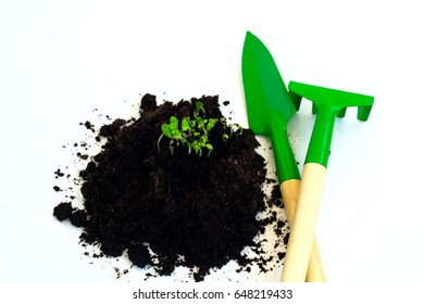 young sprouts soil garden tools