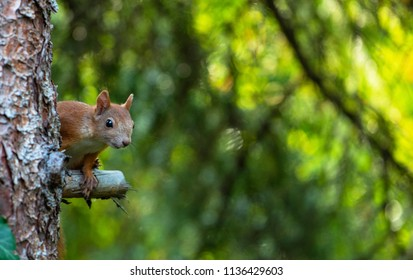A young squirrel on the tree