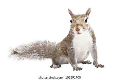 Young squirrel seeds on a white background