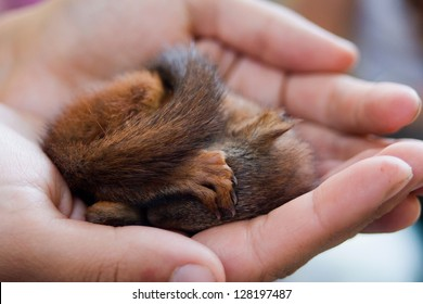 Young squirrel sleeping on hand