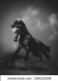Young stallion in a dramatic pose in dust