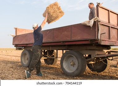 Young and strong farmer throw hay bales in a tractor trailer - bales of wheat at field