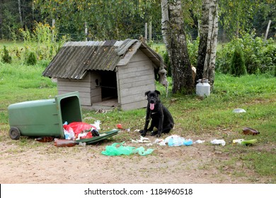 Young stupid dog (cane corso) playing with garbage container