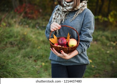 Young stylish woman in gray pullover with a fall fruit basket in hands. Autumn season atmosphere. Cute girl in checkered scarf with apples walking in the garden.