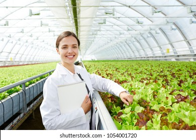 Young successful agro-engineer standing by large plantation of lettuce in glasshouse