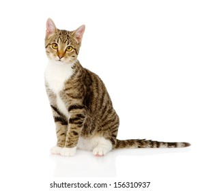 young tabby cat. isolated on white background