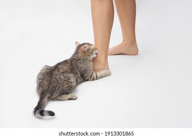 A young tabby cat licks a woman's feet. Cute kitten is playing with owner's feet isolated on white background. Strange behavior of pet. Lovely cat is licking an ankle