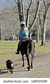 A young teen girl riding her horse to the barn being followed by a dog.