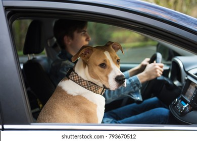 Young Teenage Boy Learning How to Drive a Car with Dog Sitting in Front
