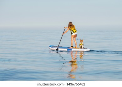 Young teenage girl in a life vest paddle boarding on a stand up board with a pet dog at Lake Ontario. Summer activities and water sports. Space for copy. Selective focus.