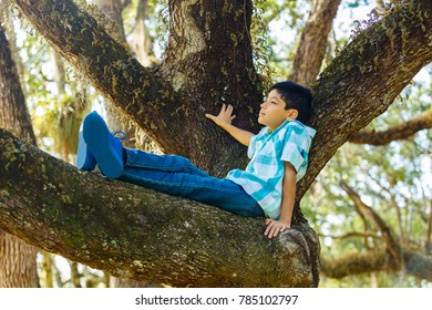 Young teenager enjoying the outdoors on a oak tree in a park setting.