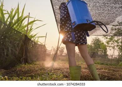 Young Thai farmer is spraying compost tea on the farm