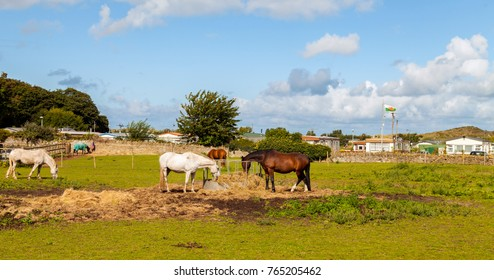 Young thoroughbred horses eating fresh hay in field. Horses eating dry hay on farm in North Wales with a static caravan holiday camp in the background surrounded by the Welsh countryside.
